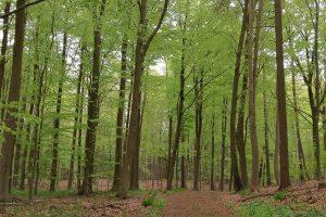 Dejlige skovområder omkring Skovhus